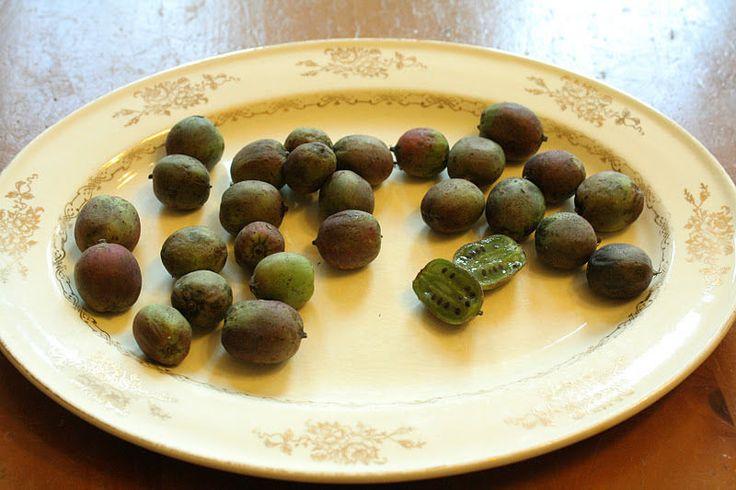 Kiwi Seeds ★ ALOHA ANNAS ★ Bite Size Organic Fruit ★ GMO FREE ★ 25 Seeds ★