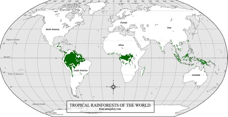 rain fall animated usa world maps | Mapa mostrando la distribución de los bosques lluviosos