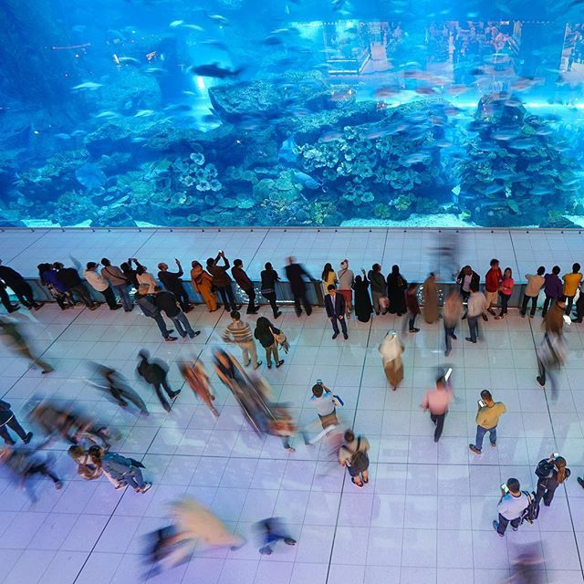Dubai Never Fails To Amaze A Full Sized Aquarium In The Middle Of A Mall Thetravelintern Travel Inspiration Fish Pet Travel