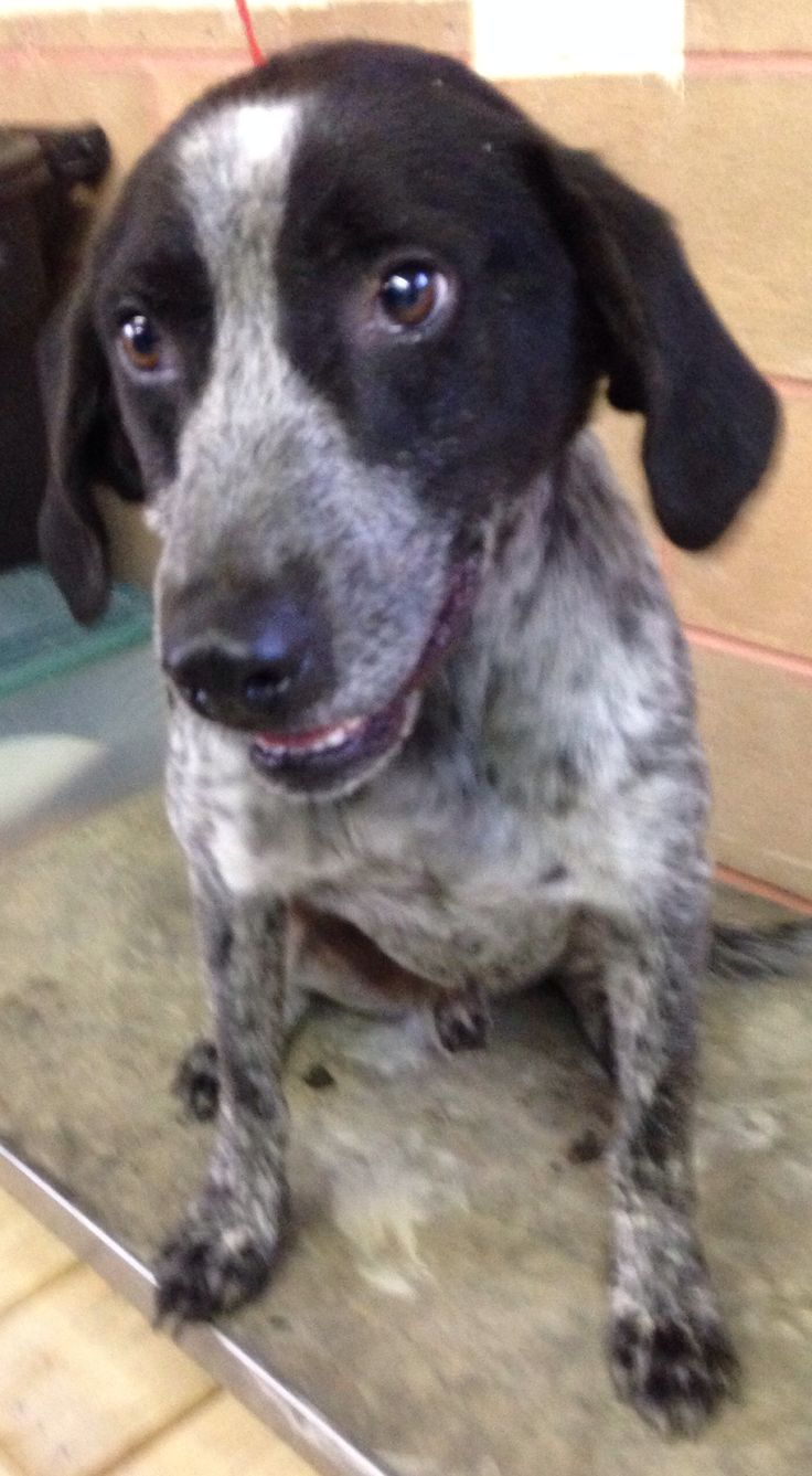 Images of Bluetick Coonhound Mix Puppies - www industrious info