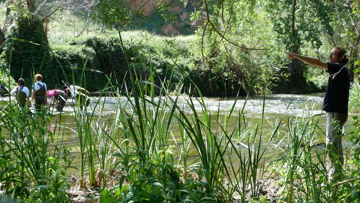Actividad de voluntariado ambiental en el río Henares a su paso por Azuqueca de Henares con trabajadores AB InBev