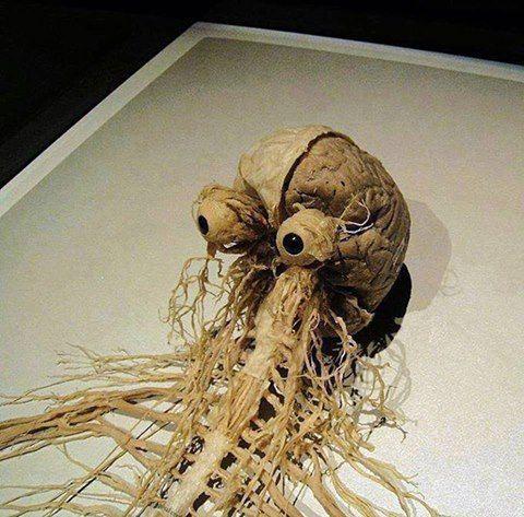 cerebro humano y médula espinal,un manojo de tejido nervioso de unos 45 centímetros de largo y dos de espesor que se extiende desde la parte inferior del cerebro a través de la columna vertebral;a lo largo del camino derivan varias ramificaciones de nervios:el sistema nervioso periférico.Fuente: Daily Anatom