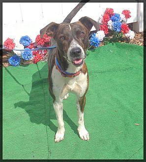 Plott Hound Mix Dog for adoption in Marietta, Georgia - SCRAPPY