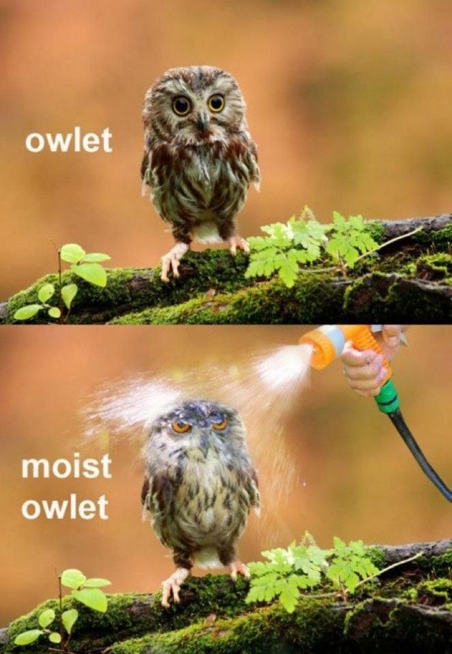 20 Hilariously Adorable Owl Memes, Not all of them are actually funny, but they all involve cute owls