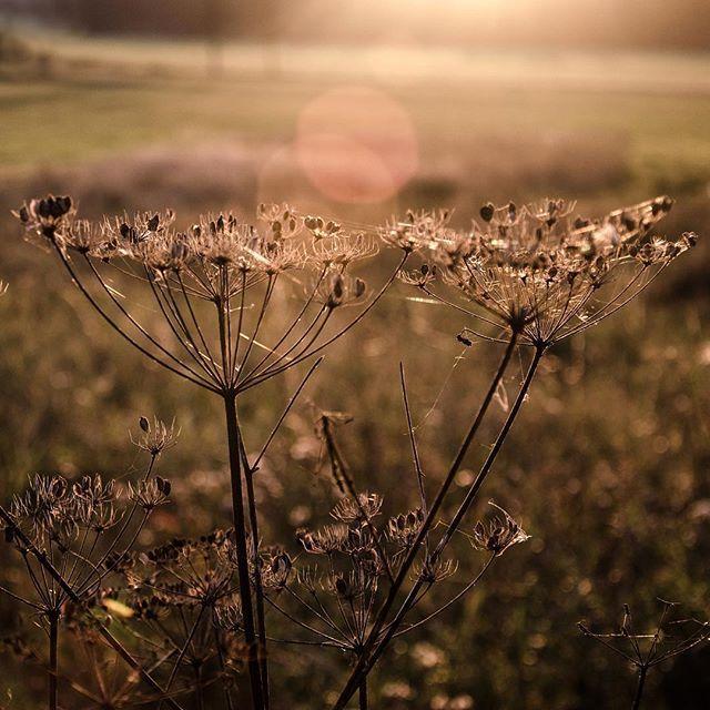 🍂 #babileto #podzim #autumn #beautifulnature #fiftyshades_of_nature #pickmotion