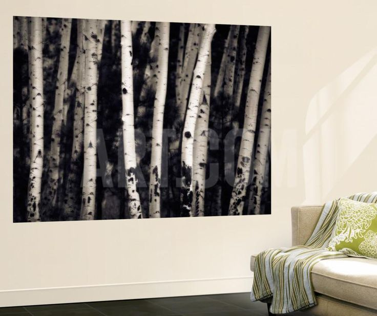 1000 ideas about birch tree mural on pinterest tree for Birch tree wallpaper mural
