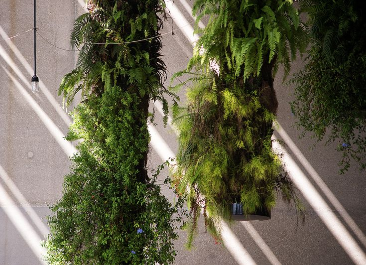The Perez Art Museum Miami is a living work of architecture. Beyond its planters and hanging gardens, it is a design that changes and shifts with time. Eac