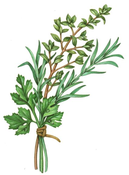 Food illustration of an herb bundle of parsley, rosemary and thyme.