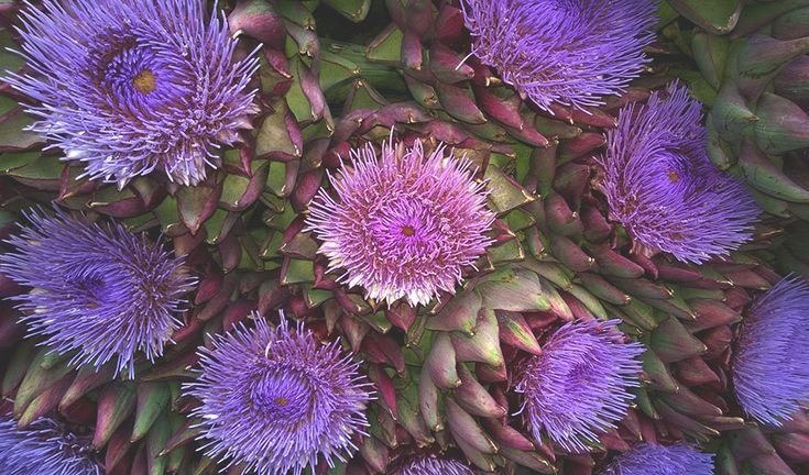 Artichoke-Cares for the liver and lowers cholesterol.