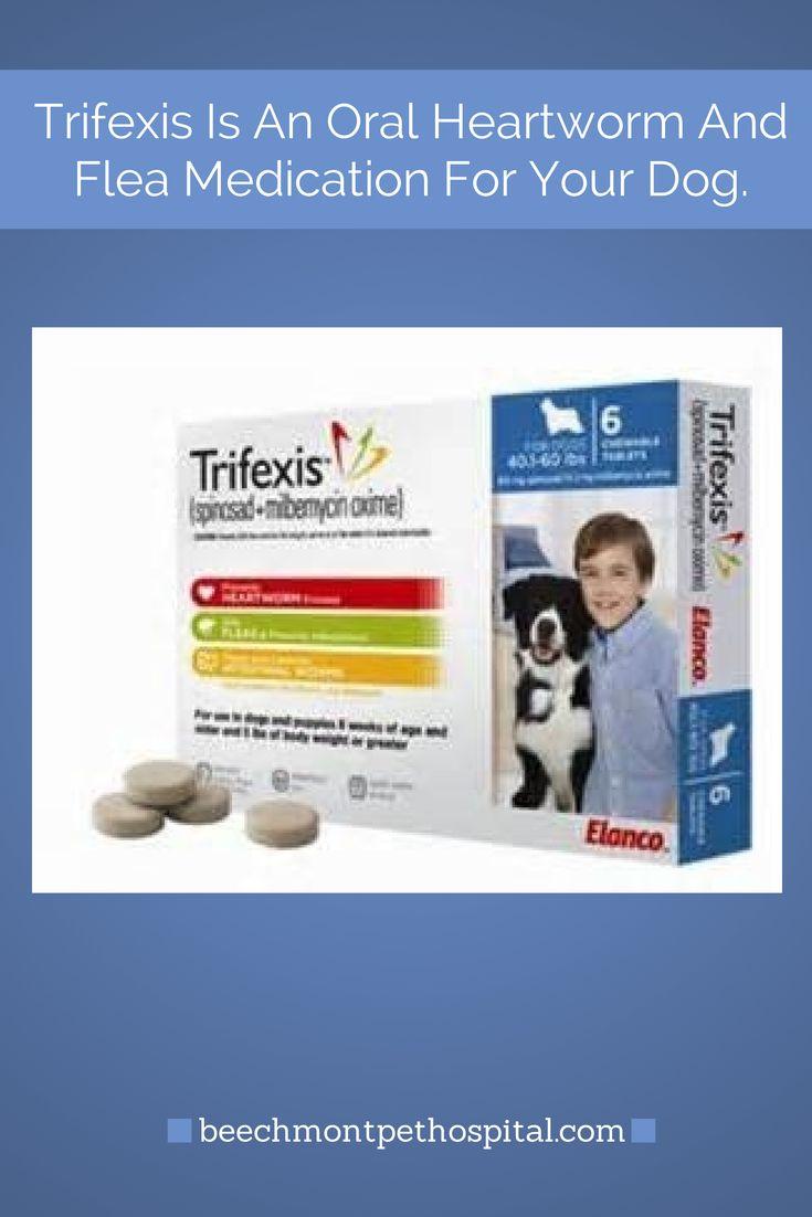 Best Oral Flea Dogs