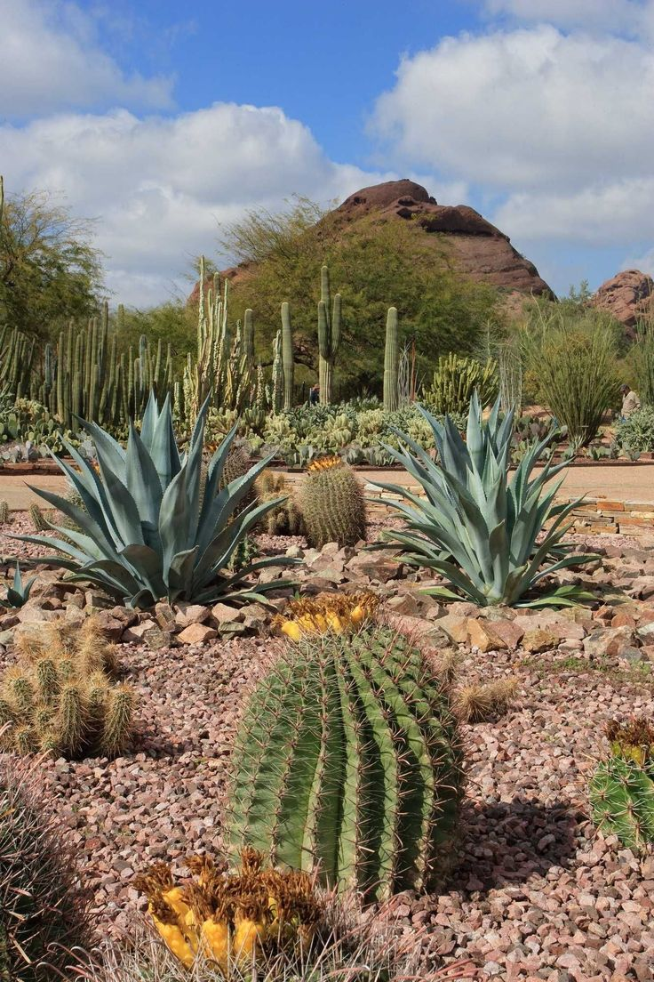 499 best Desert landscaping ideas images on Pinterest ...