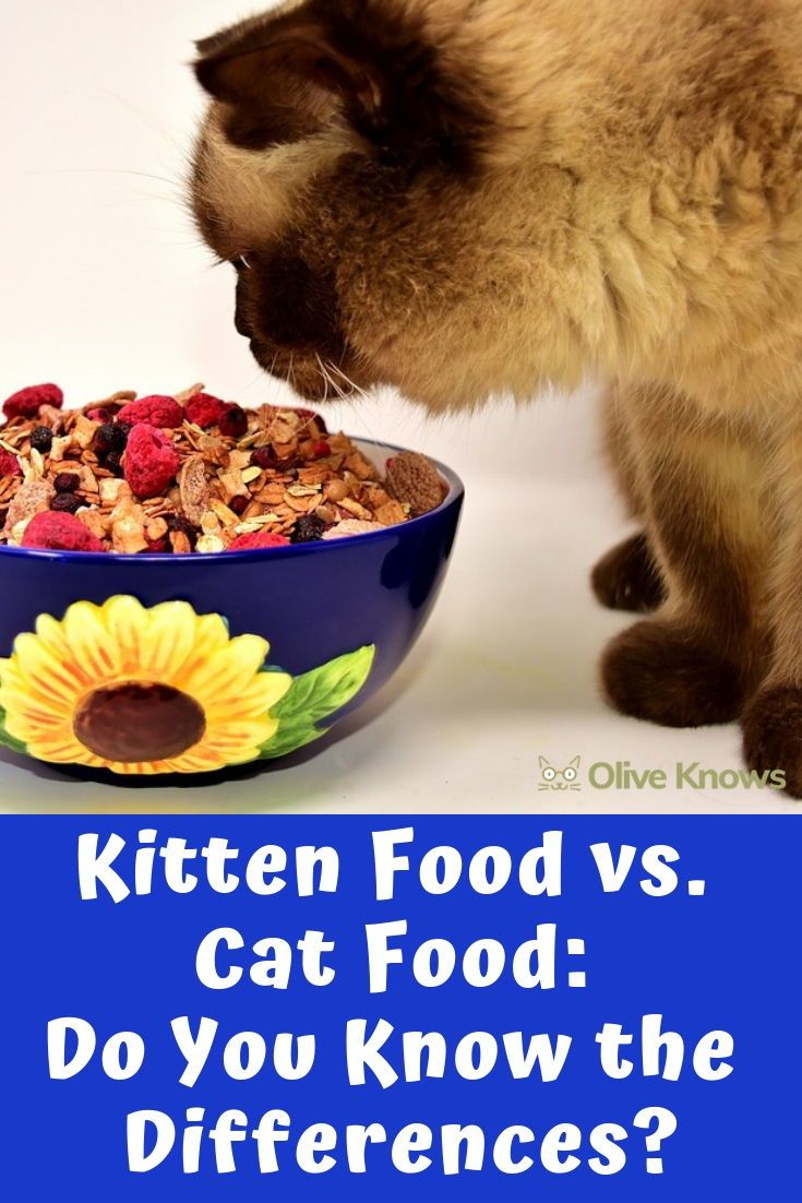 Kitten Food Vs Cat Food Do You Know The Differences Oliveknows Kitten Food Cat Food Dry Cat Food