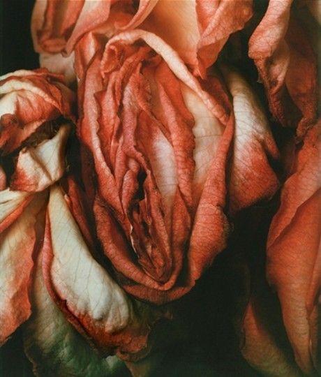 Billy Kidd  Portrait flowers