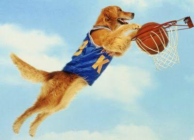 Vem aqui no meu Blog!: TOP 11: Os 11 Cães Mais Famosos do Cinema