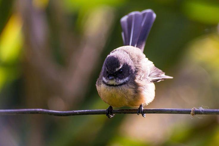 Beware of angry bird