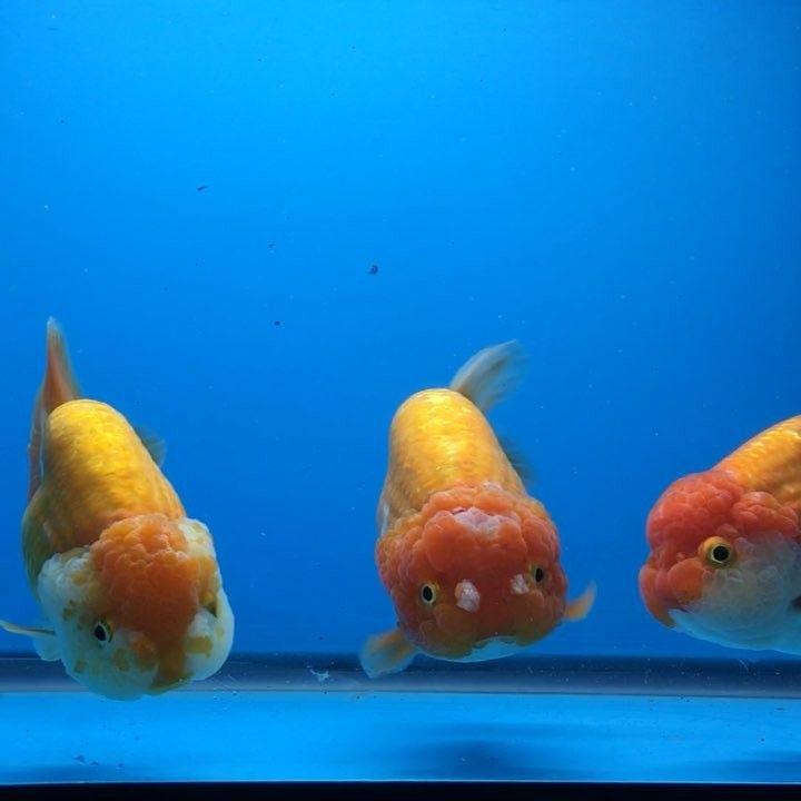 Pin On Fishies