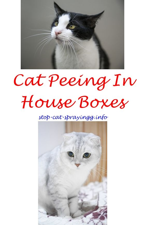 Homemade cat piss neutralizer
