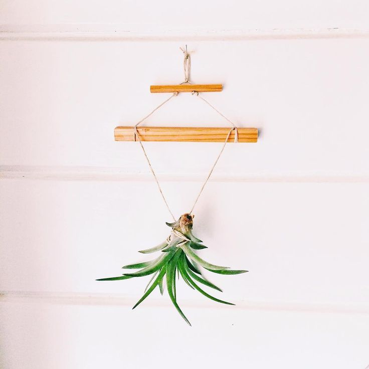 Playing With Plants. Jewelry For The Wall From Recycled Wood + Air Plant.  Www. Wiederverwertetes HolzLuftpflanzenUpcycling