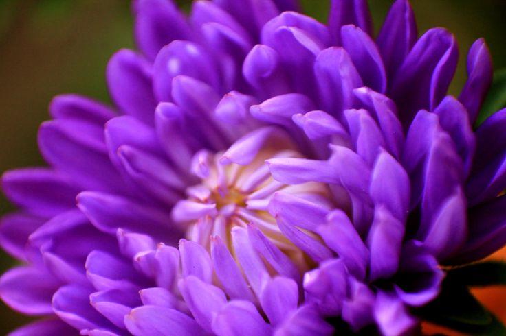 #fiori #colorati
