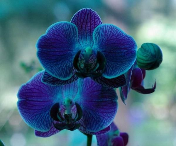 Quelle est la signification des orchidées. Les orchidées font partie des fleurs les plus attirantes et élégantes qui existent. Bien qu'elles soient synonymes de beauté et de séduction, leur signification change selon leur couleur. Si vous voul...