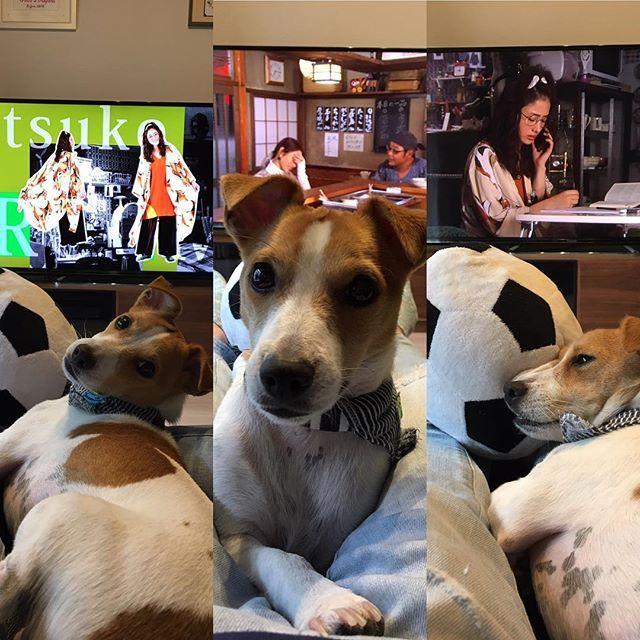 えっちゃんと俺。  #セナ #senna #jrt #jackrussell #jackrussellterrier #love #mylove #cute #dog #dogs #dogsofinstagram #myfamily #じゃっくらぶ #ジャック #ジャックラッセルテリア #犬 #いぬ #愛犬 #親バカ #変な犬 #6月生まれ #男の子ママ #石原さとみ #地味にスゴイ校閲ガール河野悦子 #地味にスゴイ #コーエツ #菅田将暉 #ゆいとじゃくてゆきとにすべきだったか