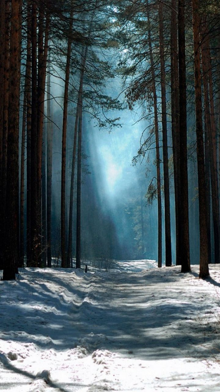 Latest light between the snow-covered trees 3