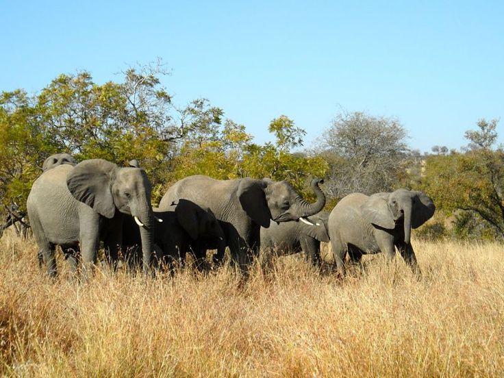 De Safari por el Parque Nacional Kruger en Sudáfrica