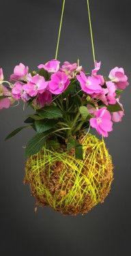 Mister Moss New Guinea_Yellow