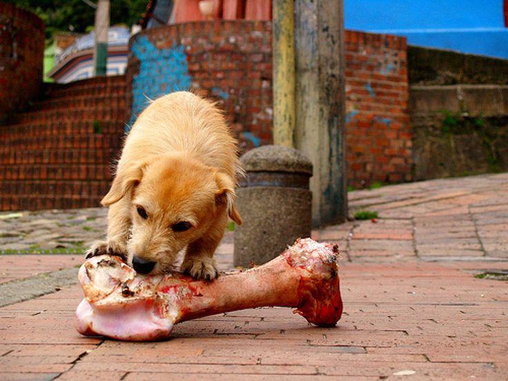 7. Huesos o juguetes para masticar o roer ayudan a mantener los dientes limpios de tu perro  Claro que puedes darle huesos para roer, son efectivos para la limpieza, aunque claro, no faltara quien te diga que no es bueno darle huesos al perro, pero honestamente que comían antes de ser domesticados? También puedes darles juguetes para morder, los mejores son los juguetes dentales Kong, son duraderos y no consumibles.