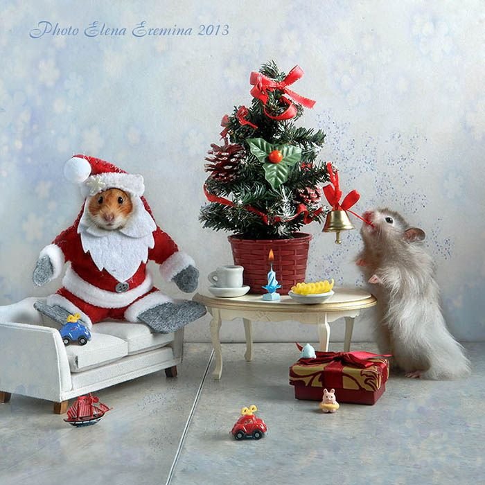 Happy New Year, with new happiness! by Elena Eremina on 500px