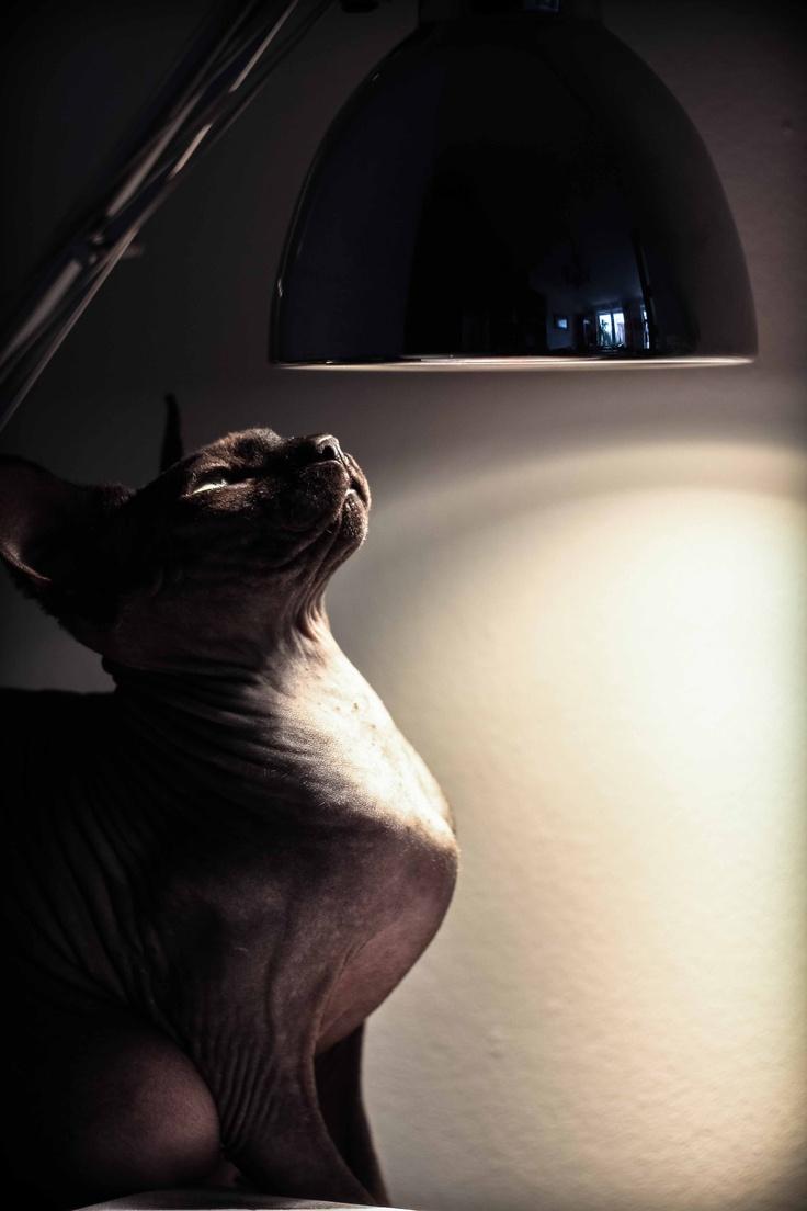 unicut's cat recipe for depression
