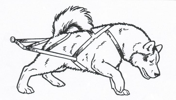 free sled dog coloring pages - photo#7