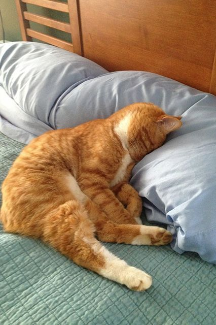 'I want sleep .. I want pillow .. zzzzz .....     11 Napping Pets Whose Sleepiness Will Warm Your Tired Heart   http://www.refinery29.com/the-dodo/68#slide-2
