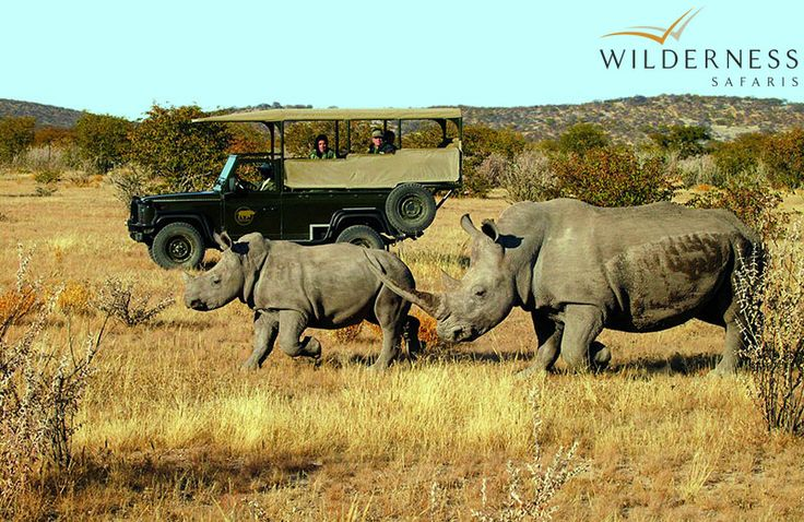 Little Ongava: Ongava is known for its successful reintroduction of white and black rhino and holds one of the largest rhino custodianships for the Namibian government.   #Africa #Safari #Namibia