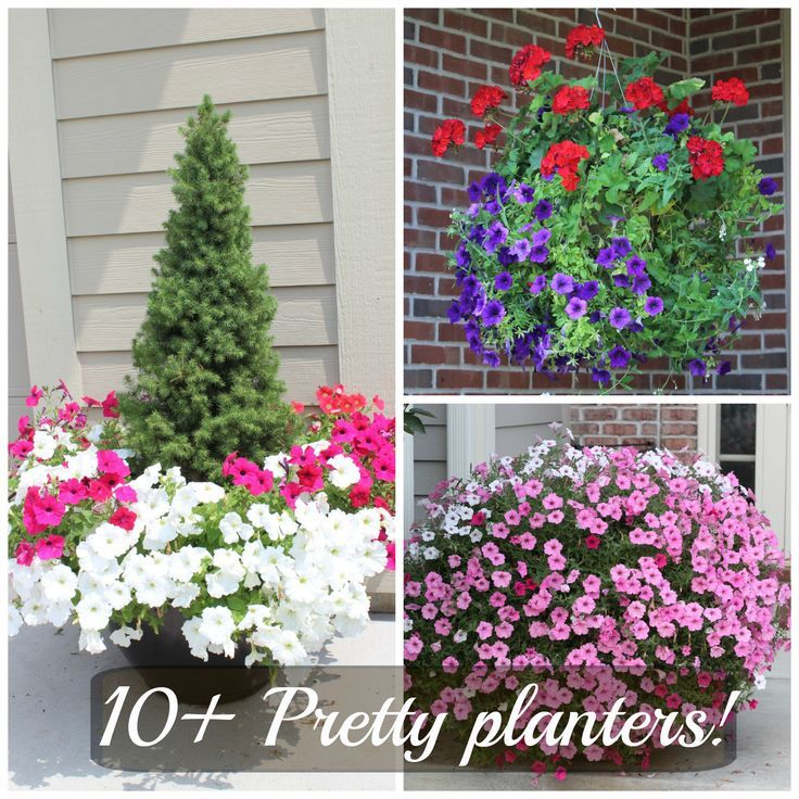 Planter Garden Ideas tiny winter forest More Favorite Planters From My Neighborhood 10