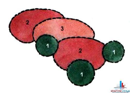Схемы цветников в тени. 1. Хоста Зибольда (Hosla sieboldiana) 2. Лилейникгибридный (Hemerocallis x hybrida 'Golden Orchid) 3. АстильбаАрендса (Astilbe х aaiendsii 'Federsee')