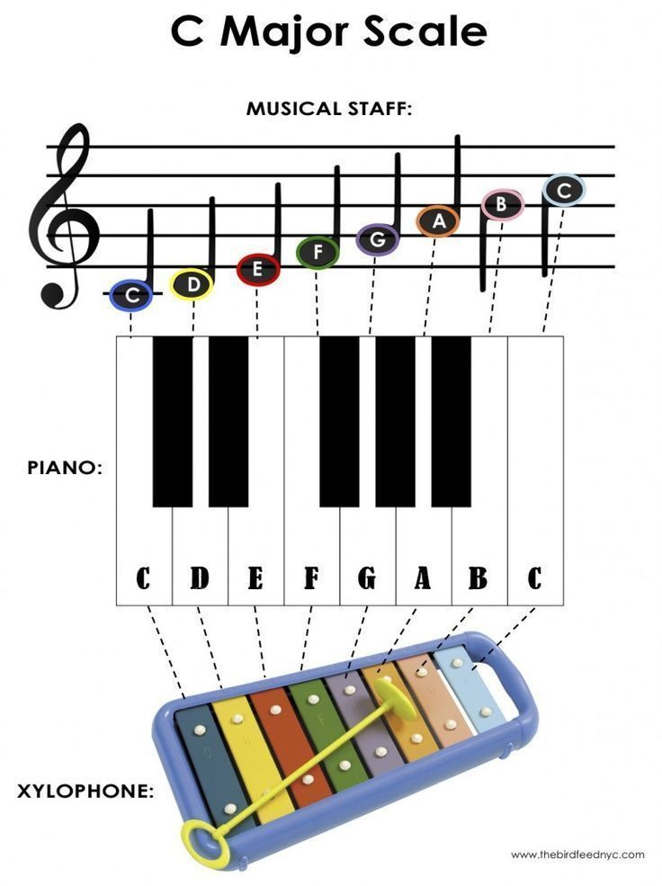activity for kids the c major scale on the piano and xylophone