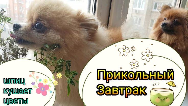 Чем кормить собаку? Прикольный завтрак.
