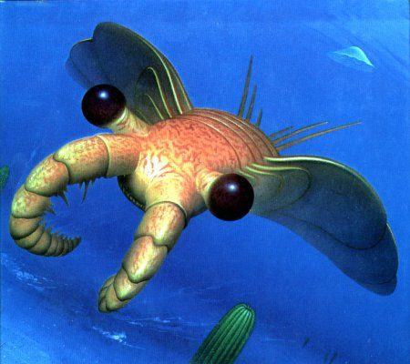 Anomalocaris, the terror of the Cambrian seas, is an extinct genus of anomalocaridid, a carnivore thought to be closely related to ancestral arthropods