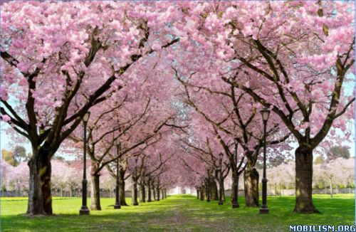 Spring Sakura Trees & flowers v1.04Requirements: 4.0.3+Overview: Incredibly beautiful, completely realistic live wallpaper. Download right now and check all the beauty of this magical place. This app has no advertisements More Info: Screens:...