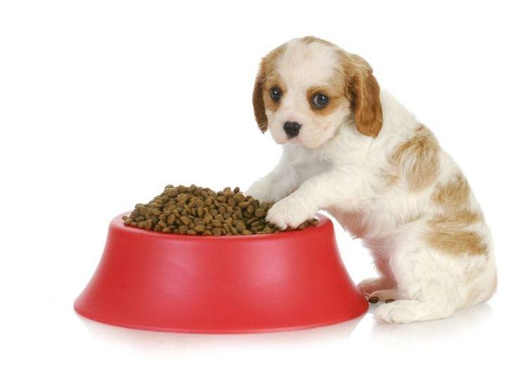 Welpen richtig füttern: Was der junge Hund braucht – Foto: Shutterstock / WilleeCole    www.einfachtierisch.de