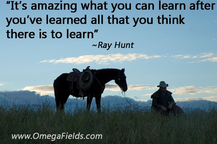 Ray Hunt Quote Www Omegafields Com Horse Expression Pinterest Horse Quotes Horses And