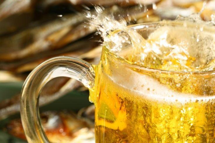 [체코맥주] 맥주의 도시 체코  프라하, 플젠의 유명한 맥주 펍 BEST 10
