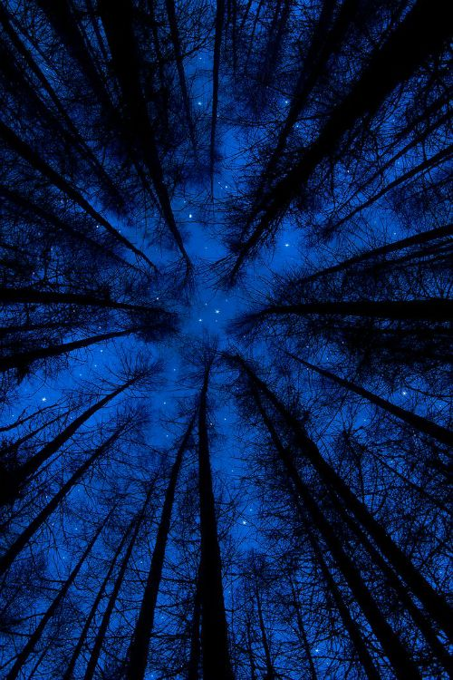 The night sky amongst the tall trees.