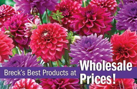 Wholesale flower bulbs.
