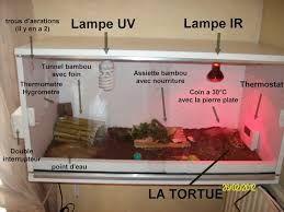 lampe uv pour terrarium tortue. Black Bedroom Furniture Sets. Home Design Ideas
