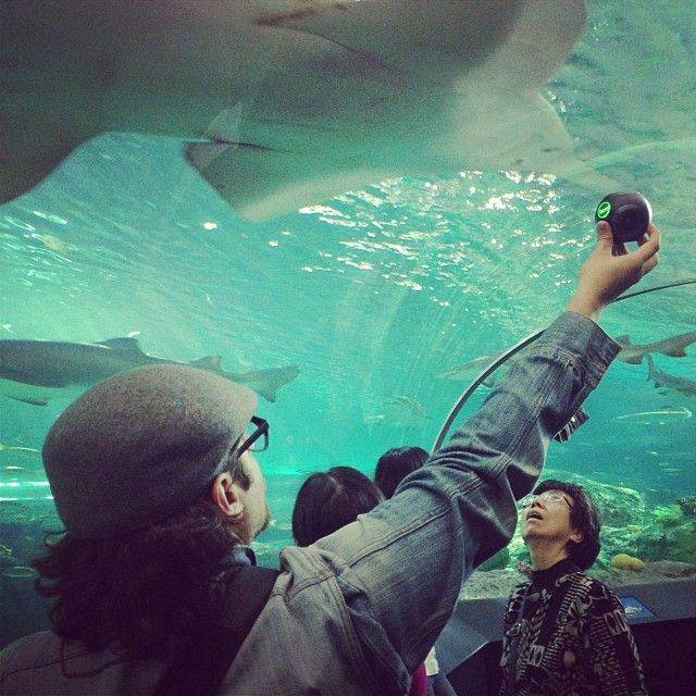 Ripley's Aquarium TDOT