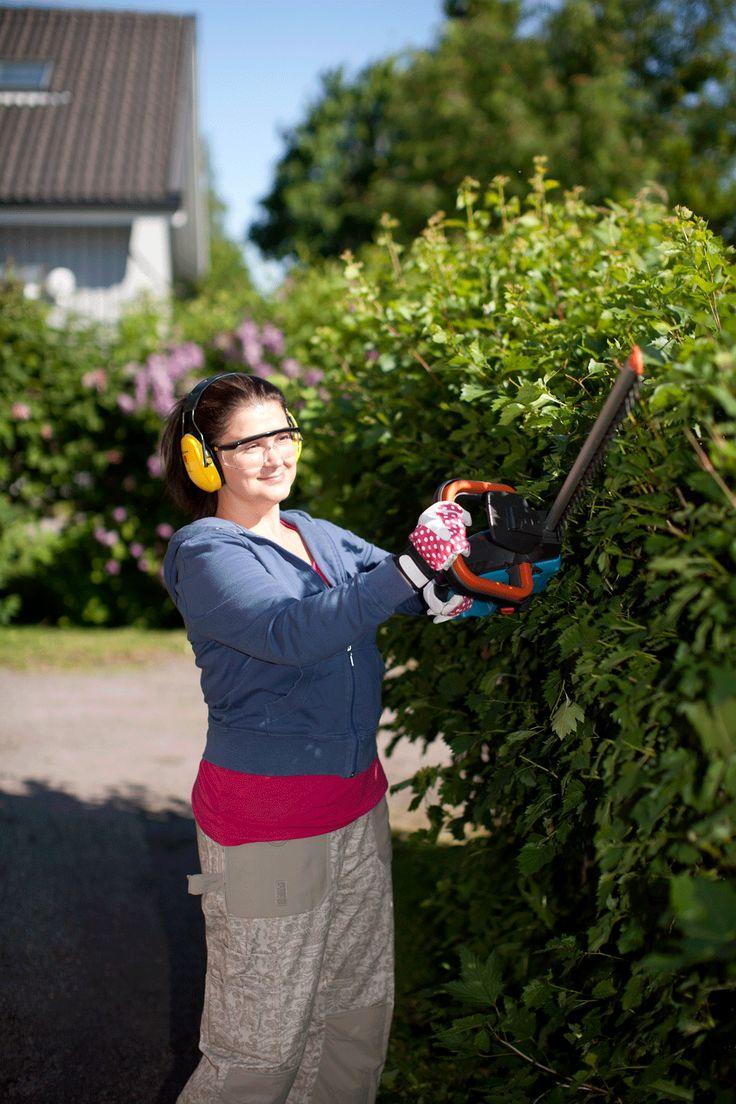 Täysikasvuista pensasaitaa pidetään siistinä leikkaamalla se keväällä ennen silmujen puhkeamista ja uudelleen kesällä kerran tai kaksi. Juttu pensasaidan leikkauksesta Kotipuutarhan numerossa 7/2013. Kuva: Maija Astikainen