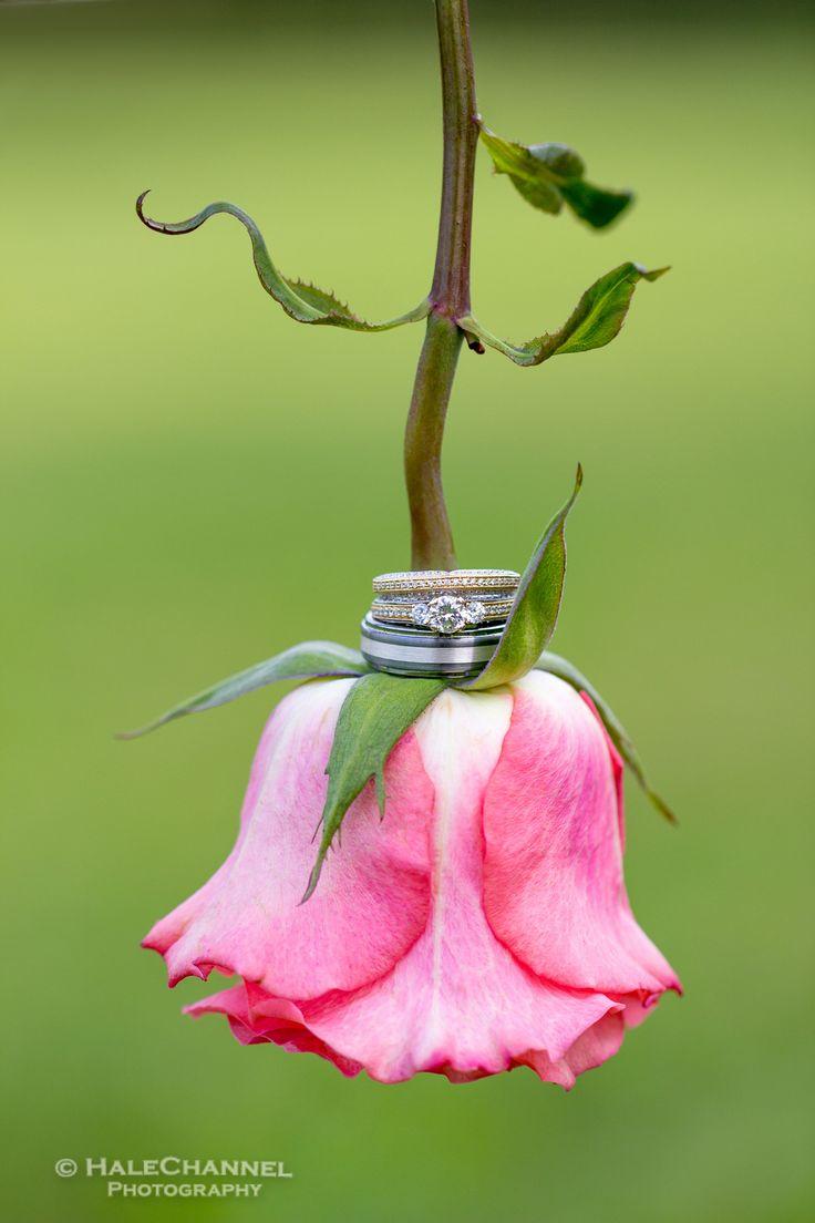 Fine Art Photos On Your Wedding Day Photo Ideas Weddings Flowers Roses Rings Artsy Creative