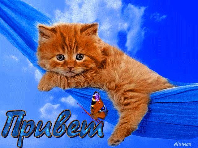 Картинки привет с котятами, картинки надписями картинка